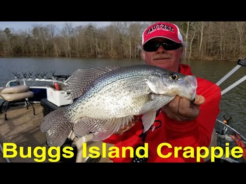 Buggs Island Crappie Fishing