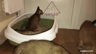 VIPLEO®. Лоток, игрушки, когтеточки для котят каракет. Caracat.