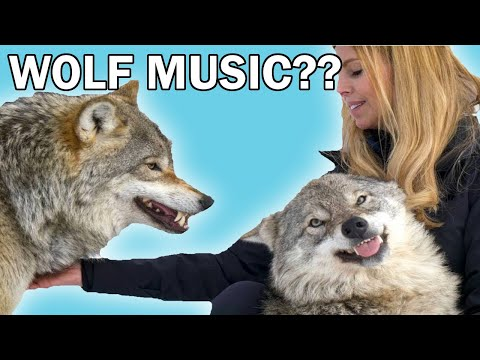 I made a song using The Wolf Lady's (Anneka Svenska) wolf howl.