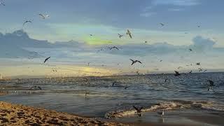 Angel Wings - Herb Ernst  (Reflexões 71)
