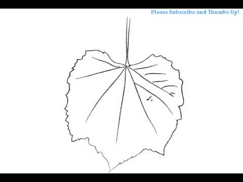 How To Draw A Simple Grape Leaf Youtube