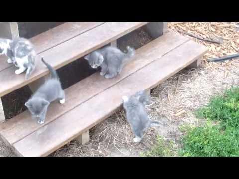 Litter of Cute Newborn Kittens Exploring Outside! (Part 2 of 2)