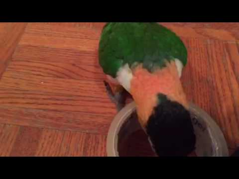 Little Bird Hops With Packing Tape