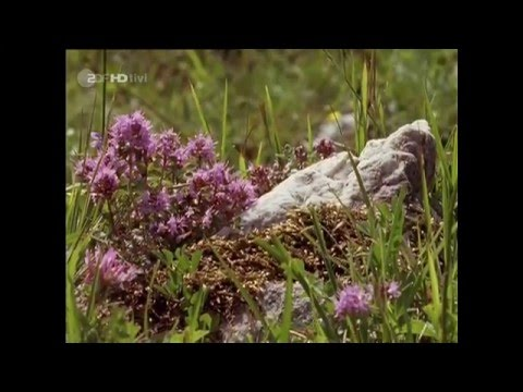 Löwenzahn mit Peter Lustig - Peter klettert in den Bergen in HD