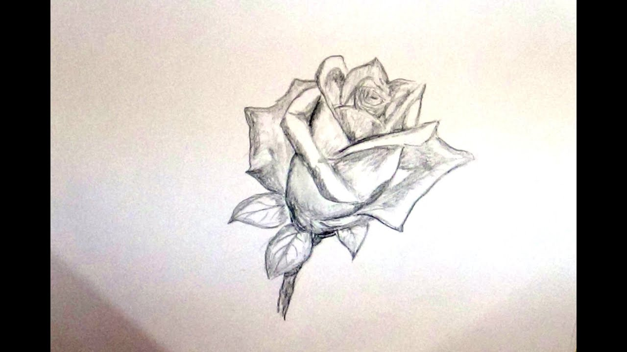 How to draw a rose flower sketch a rose flower for beginners youtube