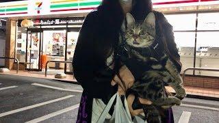 どうしても妹とお出かけしたくて夜の買い物についてきてしまった猫w