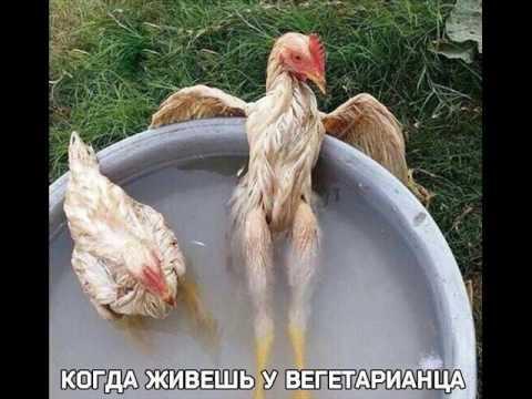 Самые смешные фото животных)))