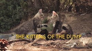 The Skiathos Kittens: Kittens of the dump
