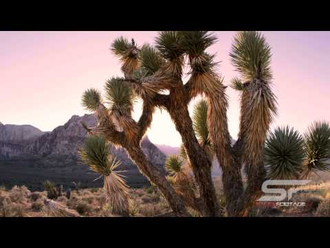 Nevada in 4K Ultra HD Stock Footage Compilation