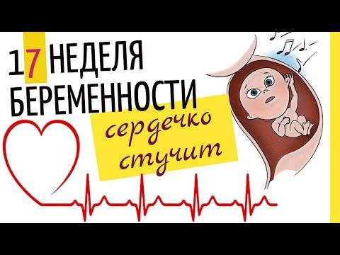 Как выглядит живот на 17 неделе беременности