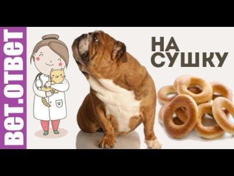 Вопрос: Можно ли собаке давать семечки?