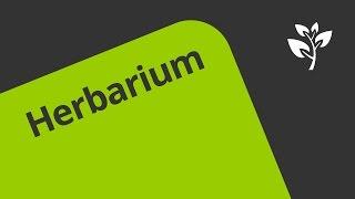 Ein Herbarium anlegen | Biologie | Botanik