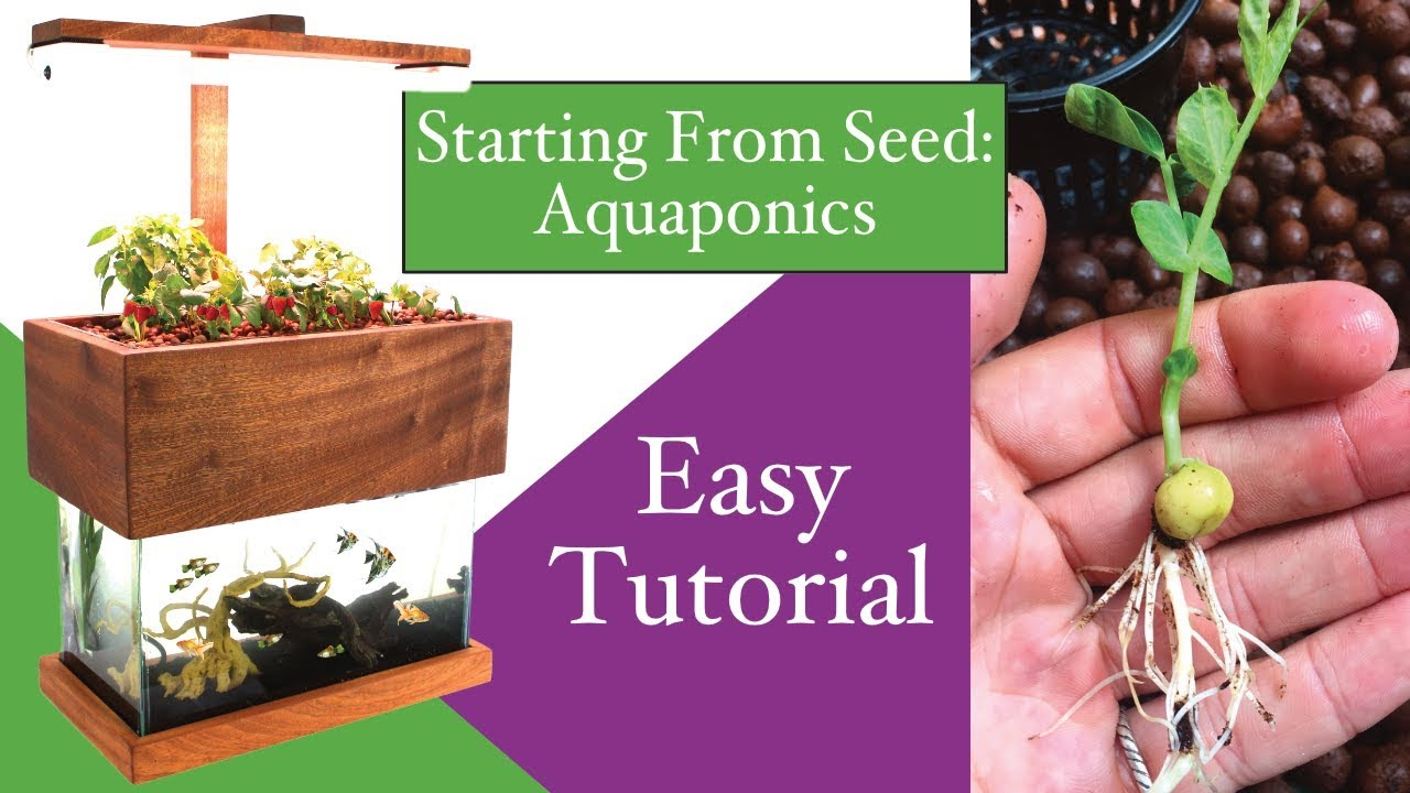 Aquaponics, Starting From Seed!
