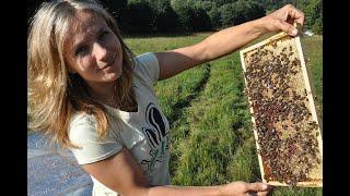 Наука и пчелы/Фильм СССР/Пчеловодство/Beekeeping