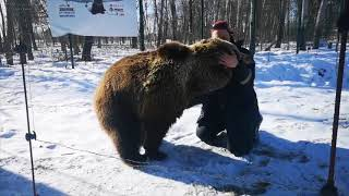 Медведь встречает пилота из Сортавалы (Карелия)