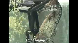 Caballo de mar macho dando a luz a más de mil bebés