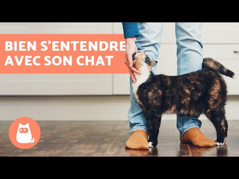 Comment Bien S'entendre Avec Votre Chat? - 10 Conseils Clé !
