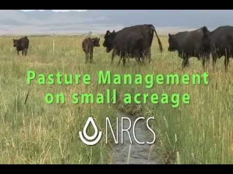 Small Pasture Management cc