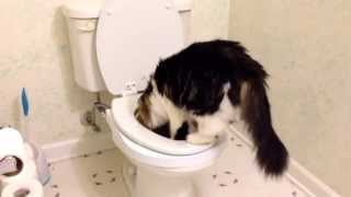 F'earless the cat - week 4 potty training