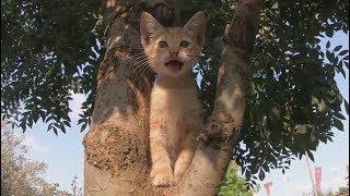 Mom cat teaching her kittens to climb a tree