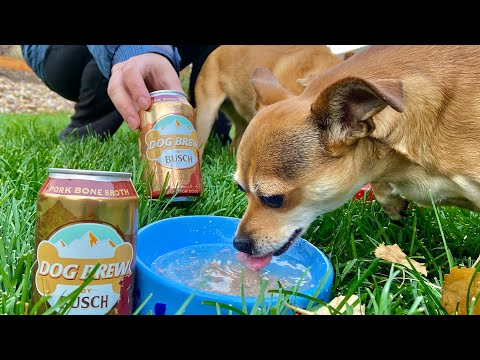 Dog-Brew-by-Busch-Review