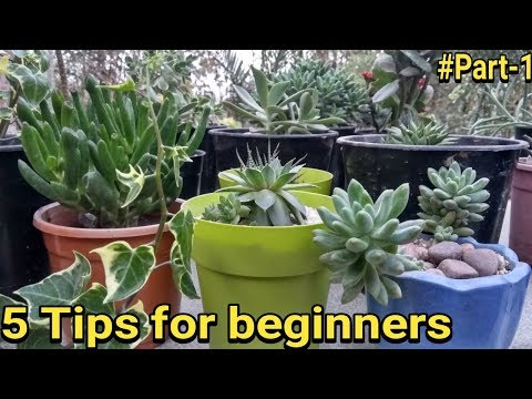 Succulent : 5 basic tips for beginners