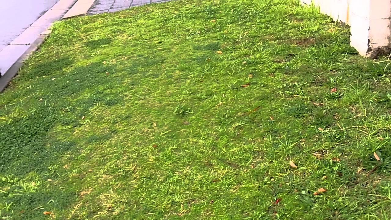 how to stop bermuda grass from spreading