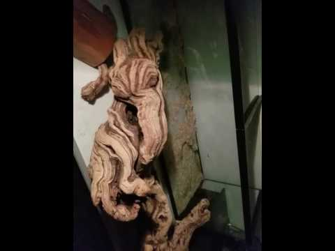 Heavy Hitters Vape ornate monitor lizard chameleon Patches O'Houlihan