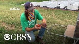 An urban farm's quest to survive and thrive