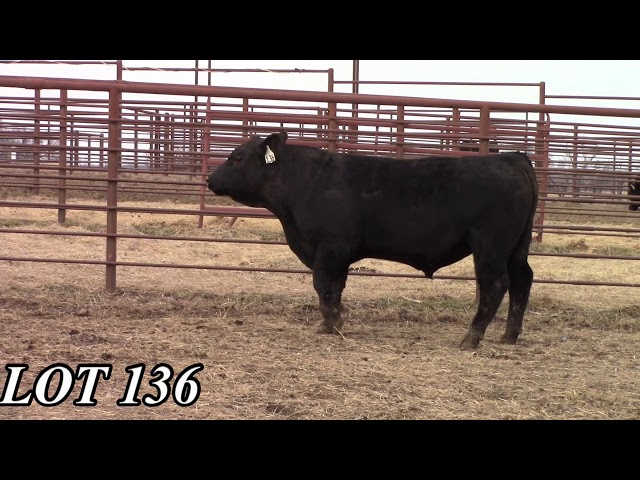 Mead Angus Farms Lot 136