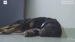 PERJANTAI: Lemmikin kuolemaa vähätellään, vaikka se on usein omistajalle kova menetys