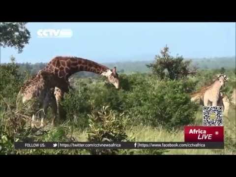 Kenya wildlife flee fighting to seek sanctuary in Somalia