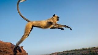 Funny Monkey in Dakshineswar Temple.