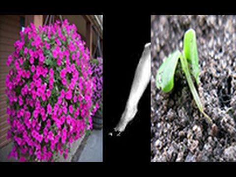Выращивание рассады: 8 проблем и их решения —