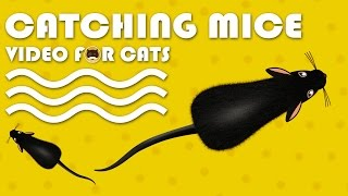 CAT GAMES - Catching Mice! Entertainment Video for Cats to Watch. thumbnail