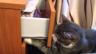 Кот Тимофей открывает ящик