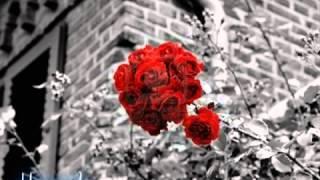 وائل كفوري الورد الاحمر YouTube