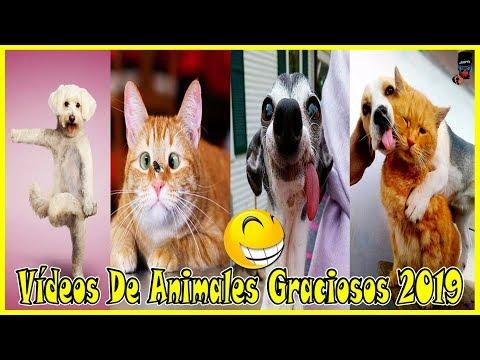 V�deos De Risa Animales Graciosos 2019 V�deo de Humor De Nuestras Mascotas Gatos y Perros Chistosos