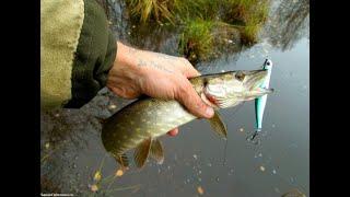 Рыбалка 2020 как поймать трофейную щуку Rapala Saage Gear