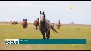 Equestrian Expedition Kicks off in Kazakhstan