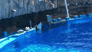 2019/04/20 アースの自由時間【公開トレーニング11:30の回開催前】@名古屋港水族館 thumbnail