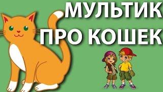 Мультик про кошек - какие бывают породы. Развивающие мультики для детей.