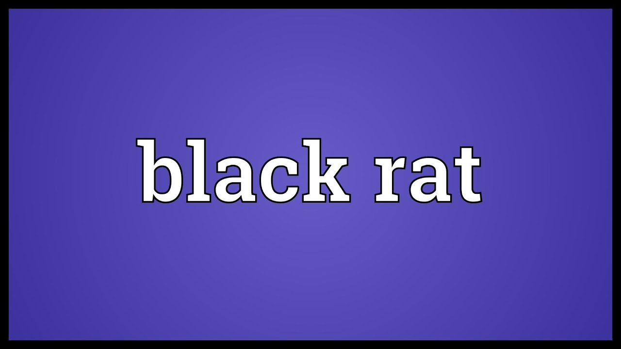 Black rat meaning youtube black rat meaning biocorpaavc Image collections