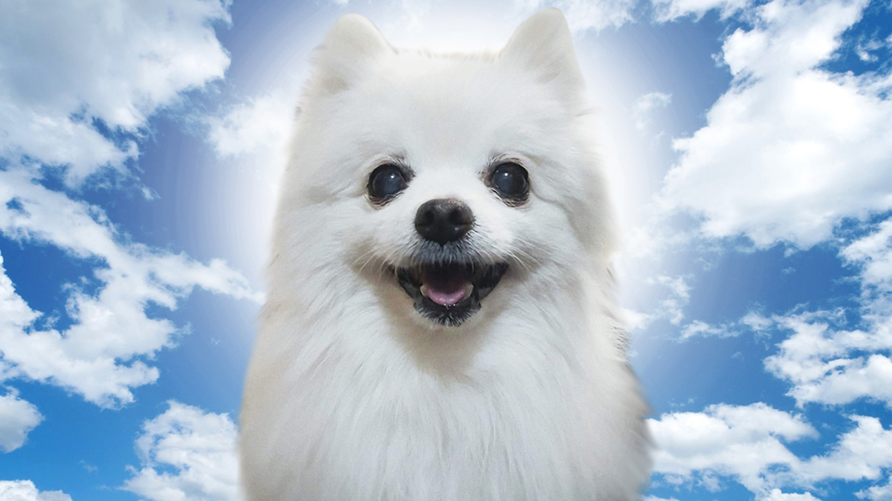 Download Gabe The Dog Tribute