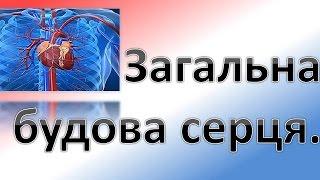 видео Функція і фізіологія клапанів серця. Крива аортального тиску » I-MEDIC