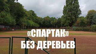 На территории стадиона «Спартак» в Калининграде разрешили вырубить 533 дерева