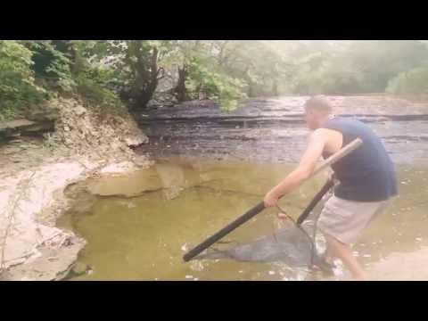How To Seine Creek Minnows