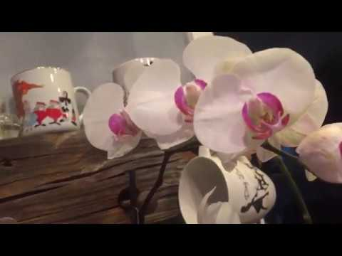 How I rescue Phalaenopsis orchids that have root loss