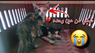 انقاذ قطط صغيره !! وكلب مقطوعه رجله 💔😩