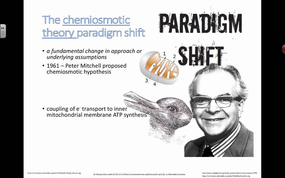 an analysis of the peter mitchells 1961 paper on the chemiosmotic hypothesis Background peter mitchell's hypothesis that a proton gradient can drive the synthesis of atp was proposed before experimental evidence supported it and was therefore met with skepticism in the 1970s, biochemist efraim racker and his collaborator walther stoeckenius tested the hypothesis.